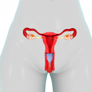 bigstock-Female-Reproductive-System-65046076