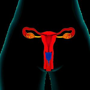 bigstock-Female-Reproductive-System-65046076
